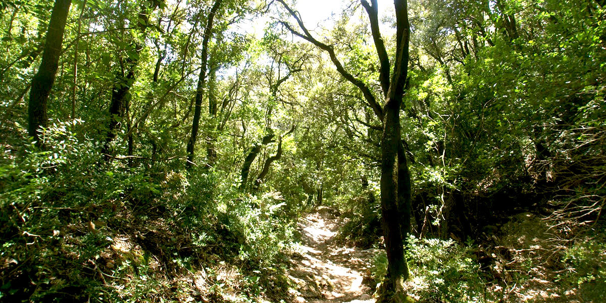 Barcelona Secret Forest: Nature Hike and Best Views