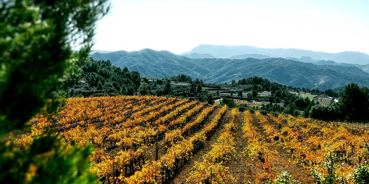 Private Priorat Tour: Exclusive Cellars, Wines and Unique Countryside